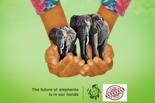 save-the-elephants